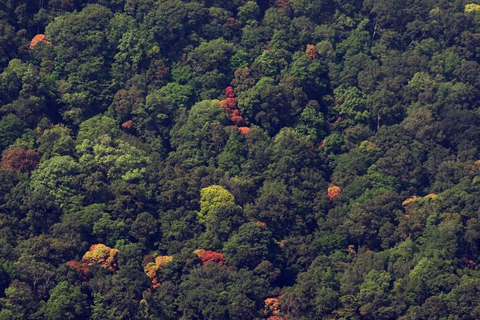 உலகின் பல்லுயிர் செழுப்பிடங்களில் ஒன்றான மேற்குத்தொடர்ச்சி மலைத்தொடரில் இருக்கும் மழைக்காடுகள் பல அரிய உயிரினங்களின் வீடாகவும், நதிகளின் மூலமாகவும் விளங்கின்றது