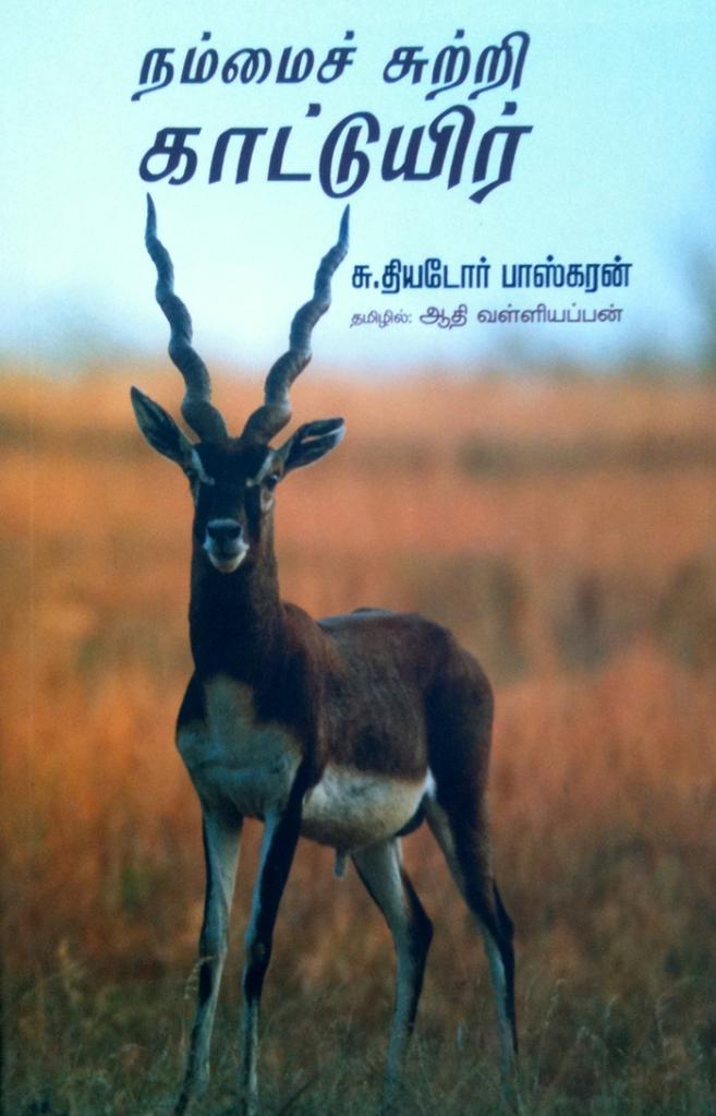 ஆண் வெளிமான் (Blackbuck Male). Photo: Kalyan Varma