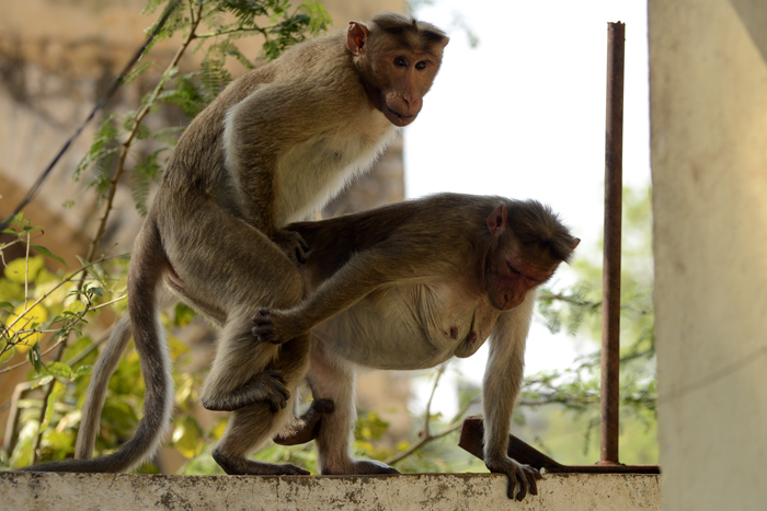 Image result for குரங்கு மூட்டை