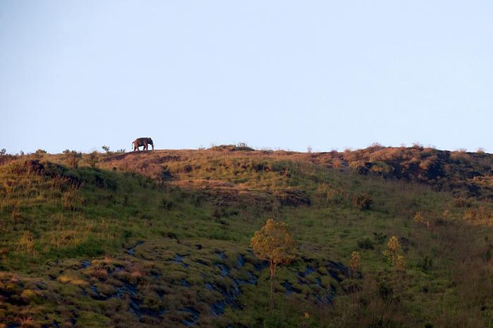 அழிவின் விளிம்பில் ஆசிய யானை (Photo: Ganesh Raghunathan)