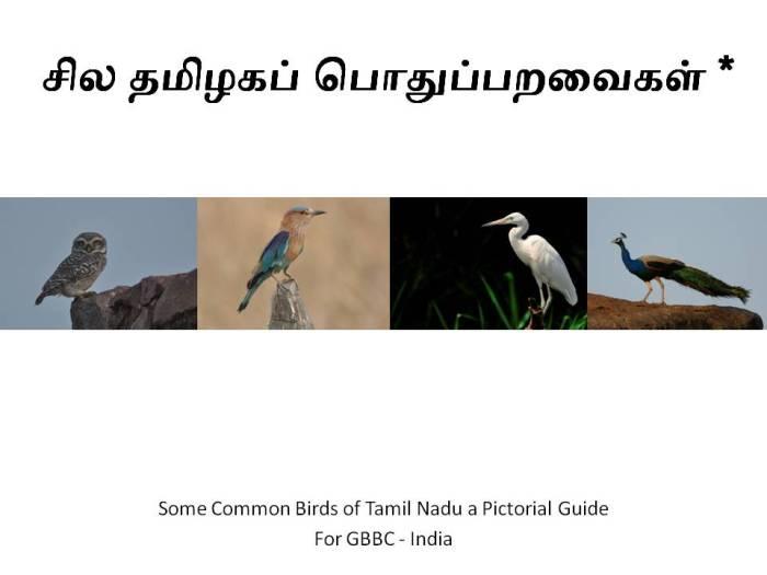 Some Tamil Nadu Birds