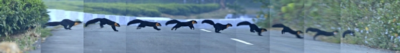 பிப்ரவரி - Nilgiri Marten எனப் படும் மேற்குத் தொடர்ச்சி மலைப்பகுதிகளில் மட்டுமே வாழும் ஒரு அரிய பாலூட்டி. மிகவும் அழகான உயிரினம். துள்ளிக்குதித்து சாலையைக் கடக்கும் போது கண்டதை மறக்க முடியாது.