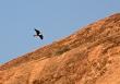 ஜனவரி - Lagger Falcon எனும் பறவையைக் காண, மதுரையில் உள்ள அரிட்டாப்பட்டிக்கு சென்றிருந்தேன். இப்பறவையை இப்பகுதி மக்கள் வலசாரை என்கிறார்கள்.